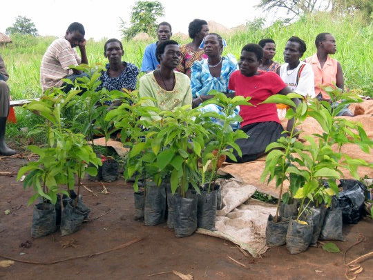 women_with_seedlings